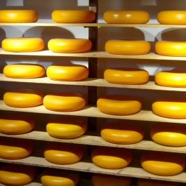 dutch chees