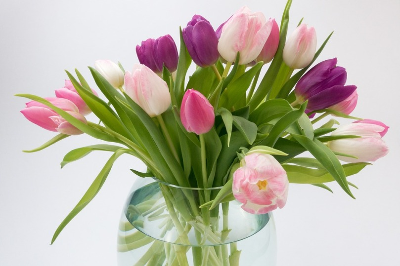 tulips_flowers_boquet